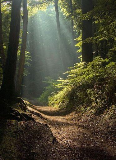 sunlite path